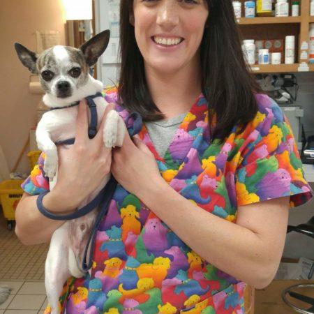 Vet Tech Holding Dog, Veterinary Hospital In Springfield MA, East Springfield Veterinary Hospital