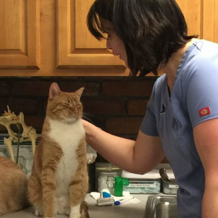 Veterinary Tech With Cat
