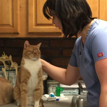 Animal Wellness Western Ma, Pet Care Massachusetts, Animal Dental Exam Western Massachusetts