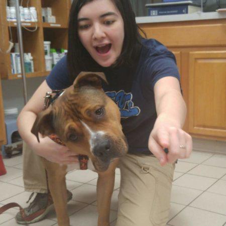 Veterinary Tech With Dog, Veterinary Hospital, Animal Hospital Western MA