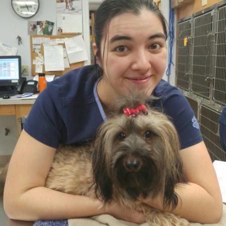 Vet Tech With Dog, Veterinary Hospital In Springfield MA, Veterinary Hospital