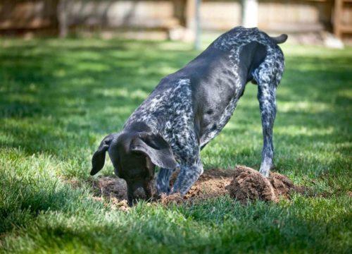 Dog Behavior, Western MA Vet, Veterinary Hospital Western MA, Vet Springfield, Vet Wilbraham